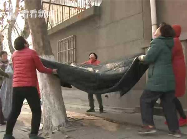 小猫被困高树4日昼夜哀鸣 市民找来起重机锯树救猫