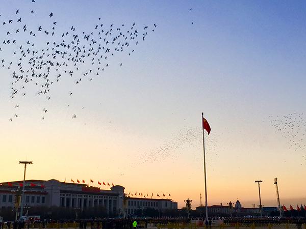 升旗结束后,天安门前放飞和平鸽。