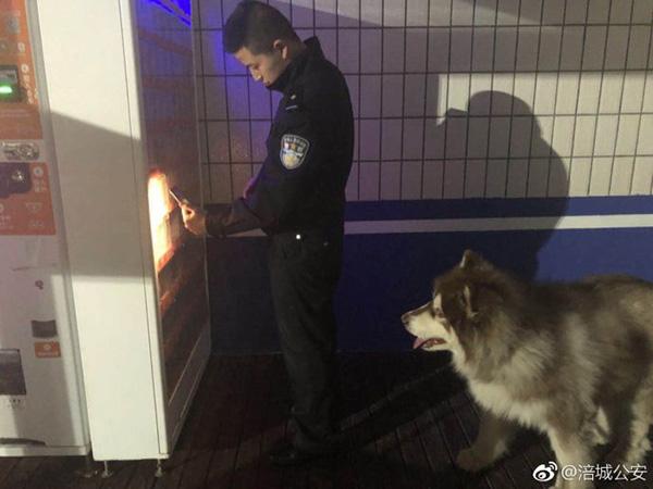 3月5日捡到的阿拉斯加在等民警买东西给它吃。图片来源:@涪城公安