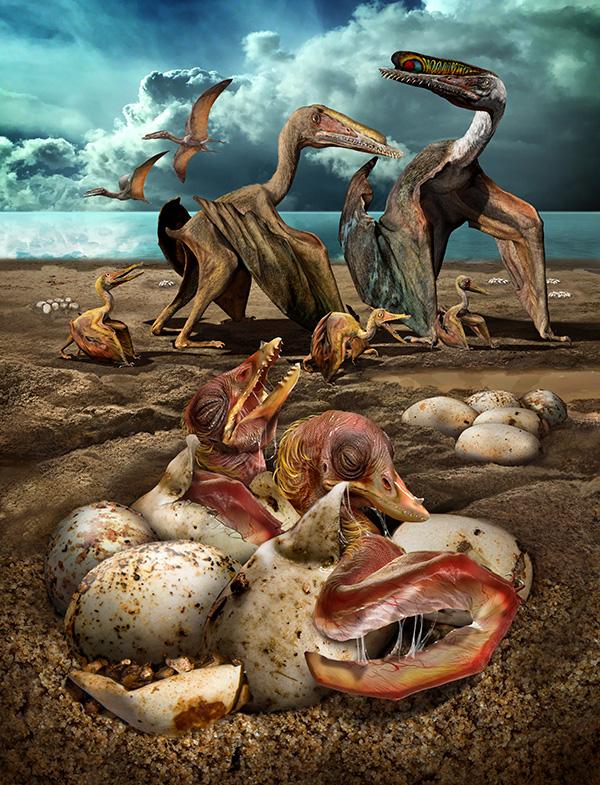 哈密翼龙胚胎出壳复原图(绘图者:赵闯)。