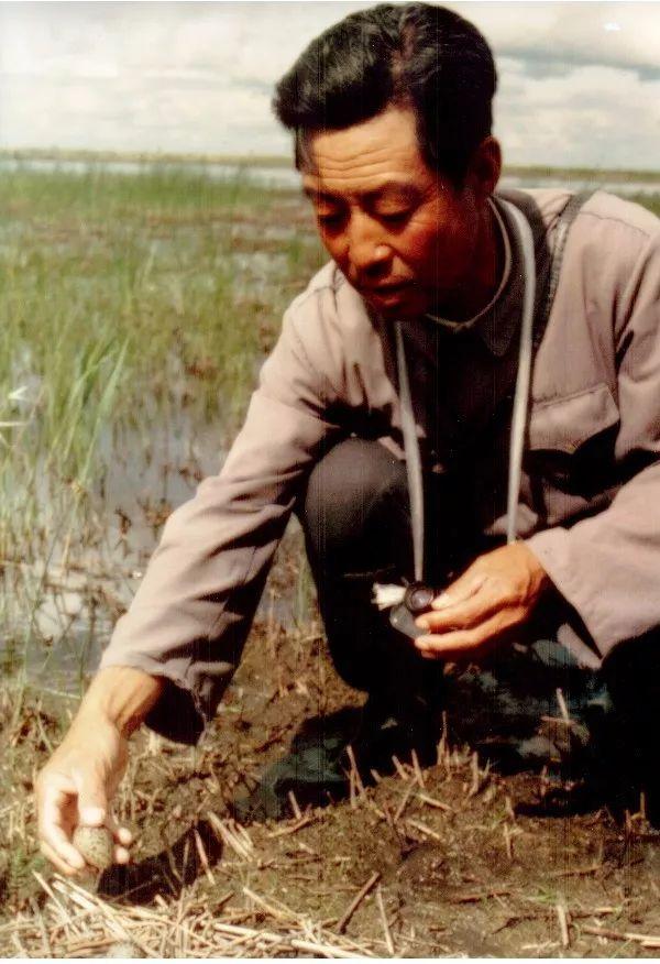 这是扎龙第一代养鹤人——徐秀娟的父亲徐铁林工作时的场景(资料照片)。新华社发