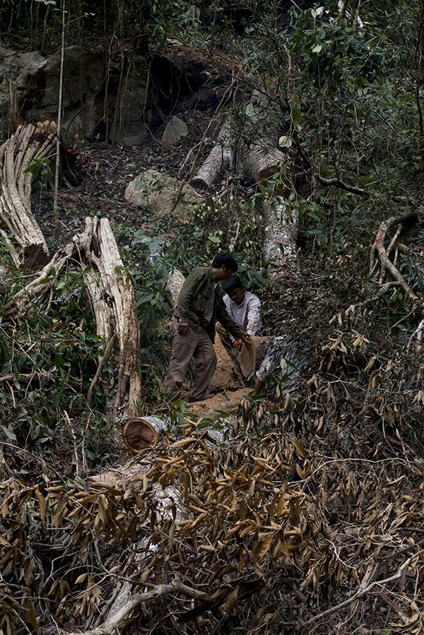 淹没区沿线分布的砍伐点,工人正在砍伐作业。受访者供图