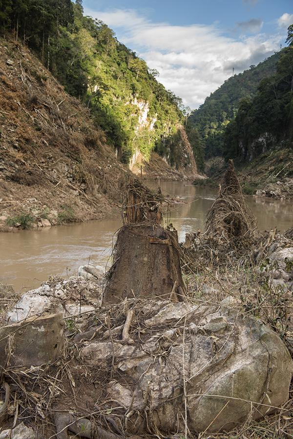 清库时被砍伐的树根需要三个人合抱才能围拢。受访者供图