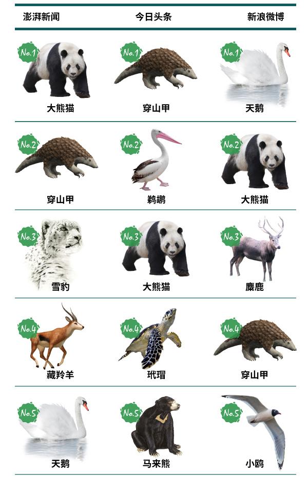 2017年国家重点保护动物关注度排名:大熊猫穿山甲进前十