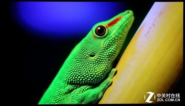 4K图片测试:颜色还原非常到位,色彩鲜活质感十足