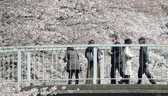 民调:日本再成为中国20至40岁人群最想去旅行目的地