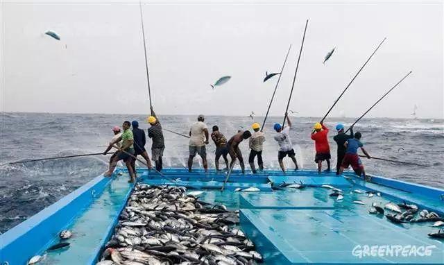 ▲太平洋上的捕捞作业 图片来源:绿色和平组织官网