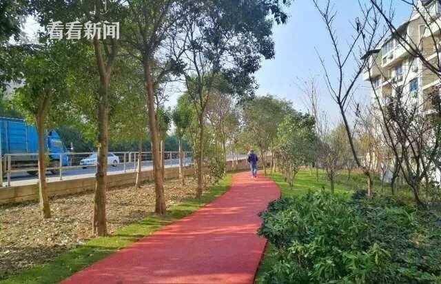 宝山建成逾百公里健身道 绿地河边健康迈开腿