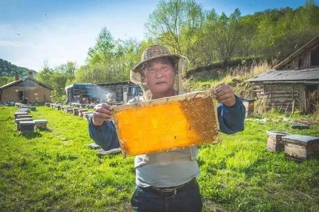 ▲京东帮助饶河黑蜂蜜销往全国
