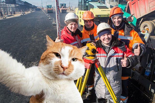 普京工地视察工作 被一只胖橘猫意外抢镜(图)