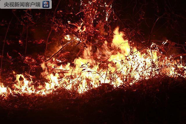 云南长虫山发生森林火灾 火势基本控制无人员伤亡