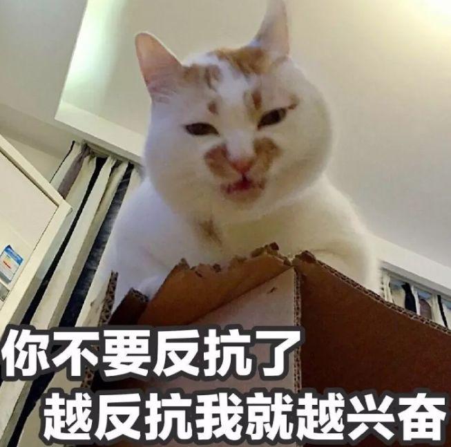 渣男最常用的4种猫咪微信表情包.图片