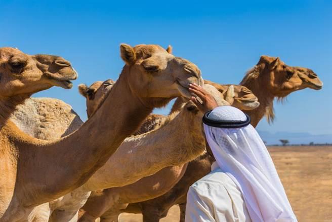 大马男子在沙特喝生骆驼奶 回国后被确诊患MERS