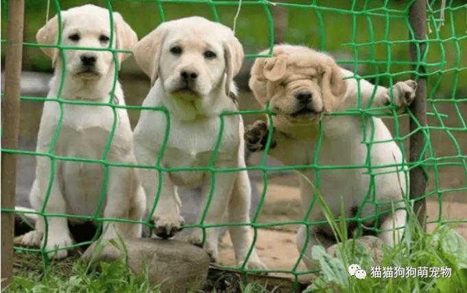 送你一堆萌萌哒小狗子