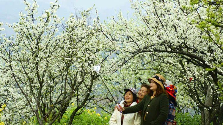 在深圳,春季赏林观花就走这五条线路!