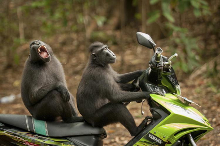 《猴子逃跑》拍摄者:Katy Laveck Foster @视觉中国