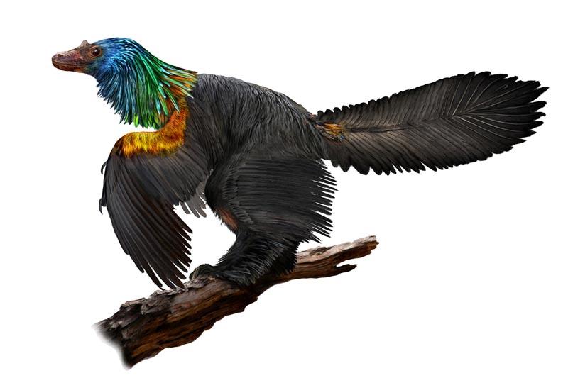 中国发现1.61亿年前彩虹恐龙 羽毛鲜艳体型庞大