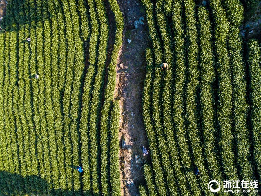 郑州气象局:从气候学角度看,郑州特大暴雨超千年一遇