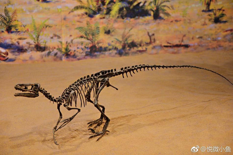 与恐龙的不期而遇