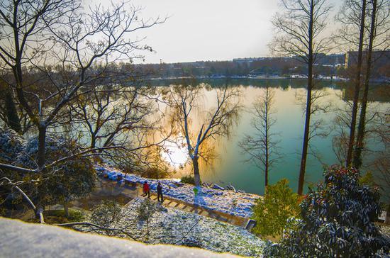 冬日清晨从仲宣楼上往下看,荟园内清洌洌的如此妖娆多情~