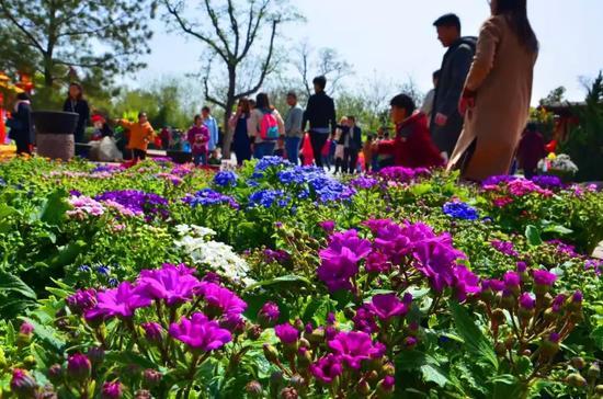 今年清明假日期间万岁山景区呈现出以下特点: