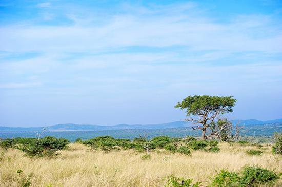 非洲,在南非开启一场与野生动物的狂野之旅!