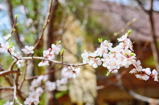 舌尖上的北京小西藏 这里的春天最好吃