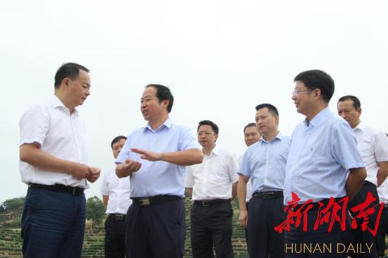 △衡阳市委书记郑建新一行调研衡山县茶产业