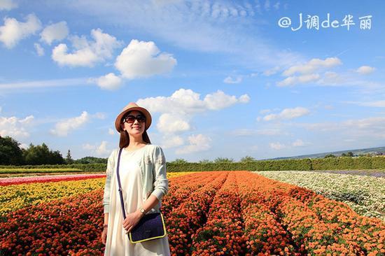 又到一年赏花时,七彩富良野花田