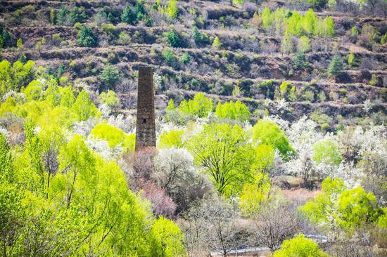 这里比甲居藏寨隐蔽,百年梨花开满山,仿若世外桃源
