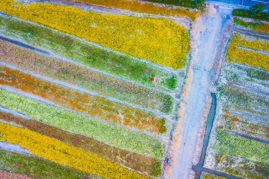 秋日湖边的花海 像大地的织锦