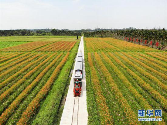 海南琼海:农旅结合助推乡村振兴
