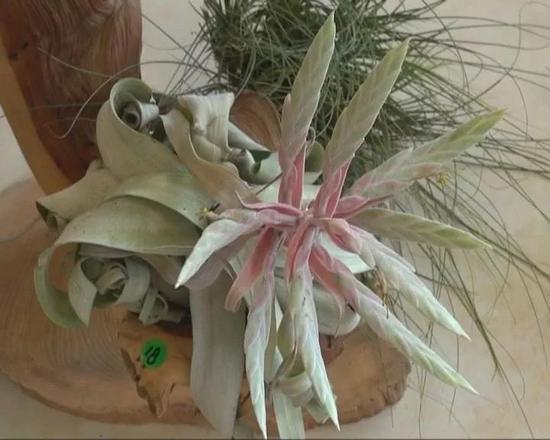 园艺超市 植物专家 李国强