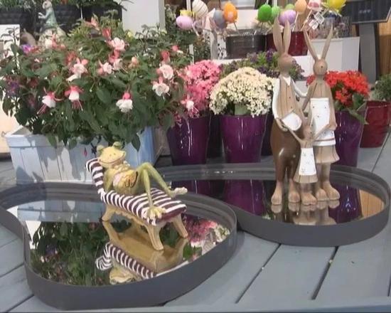 打造空气凤梨专区新奇特植物亮相世园会园艺超市