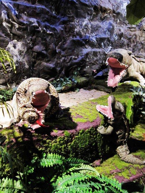 海豹和鳄鱼们。