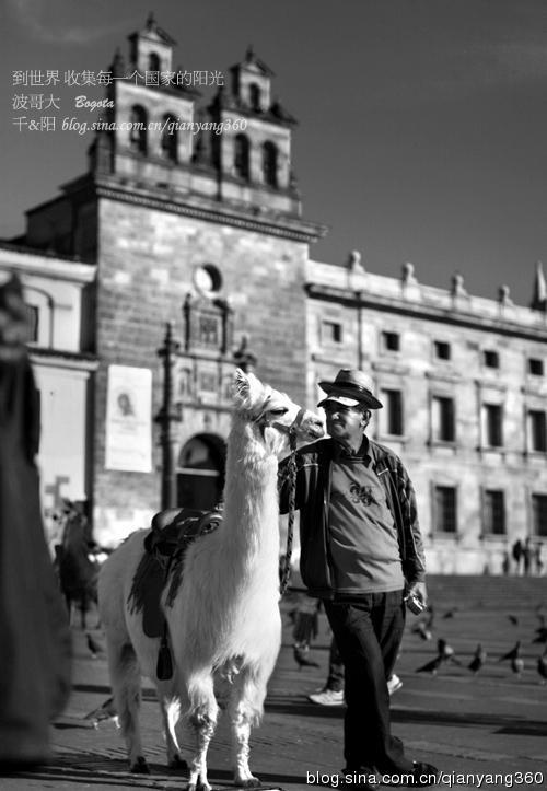 [哥伦比亚]波哥大:最危险的城,遇见最萌的它