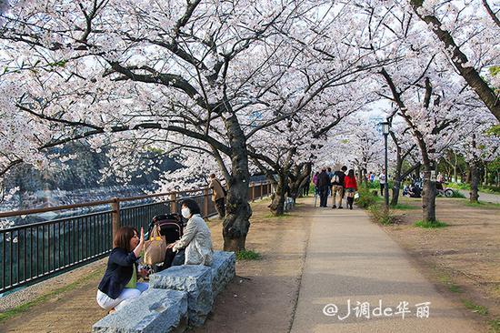 画樱花的步骤图解
