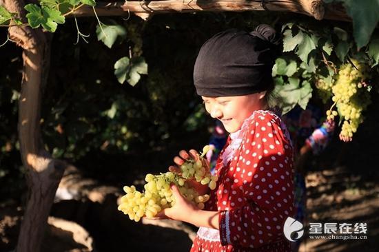 (吐鲁番的葡萄和小姑娘的笑容一样甜。资料图。图片由星辰影像拍客 小黑 摄)