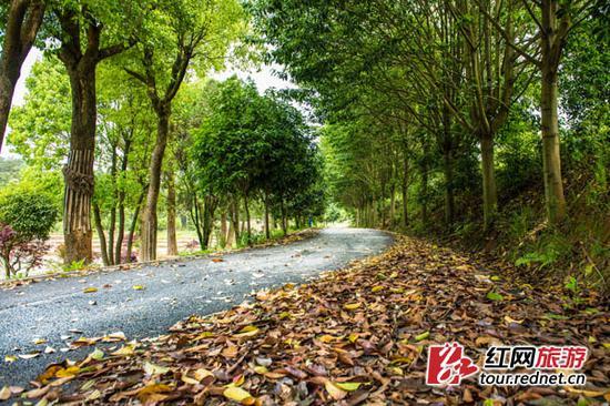 开慧镇金湘园园区游览公路。