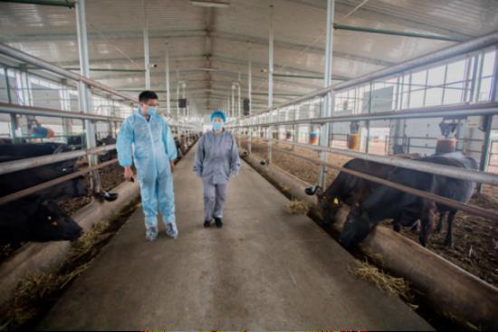 齐齐哈尔市龙江县和牛生产繁育基地