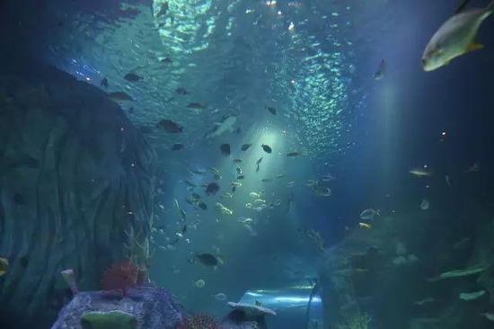 ▲海洋探索中心