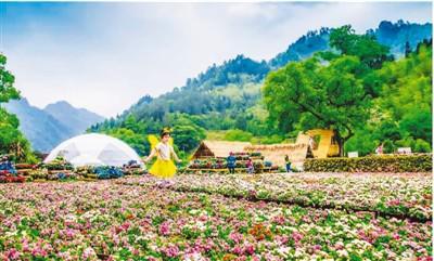 青山绿水创造生态财富