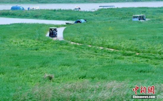 """资料图:鄱阳湖雨季最美""""水上公路""""。 卓忠伟 摄"""