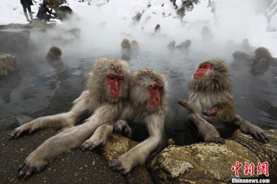 泰国景点野猴增多 虎窟寺贴中文提示禁止游客喂食