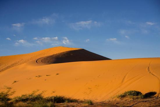 珊瑚粉红沙丘州立公园(Coral Pink Sand Dunes State Park)©Austen Diamond Photograhy