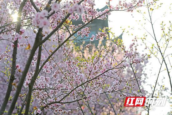 满园深浅色,重重叠叠的花瓣,浸润着春风,明媚了整个园区。