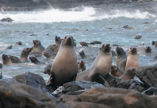 海豹生态游艇之旅