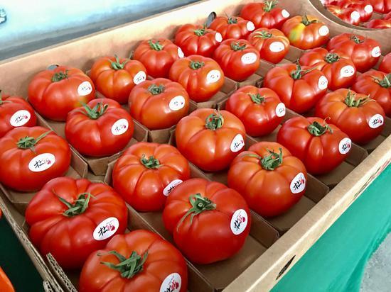 太谷番茄小镇种植的西红柿