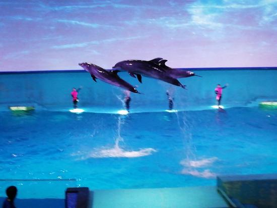 海洋馆海豚表演