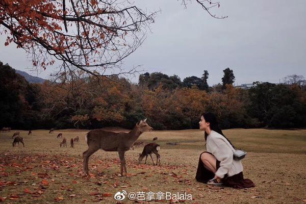 奈良的秋天和小鹿
